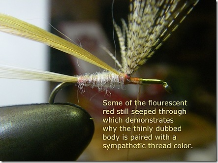 The dubbed body with hackle tied in
