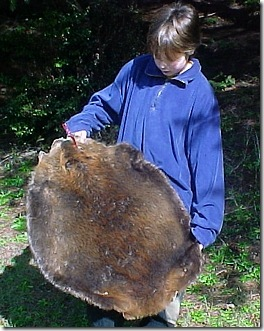 beaver_round2