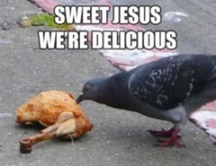 Pigeon_Chicken