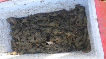 frog640